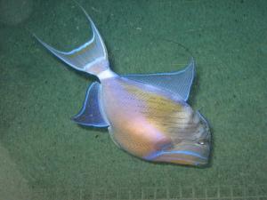 Fish from Baltimore Aquarium